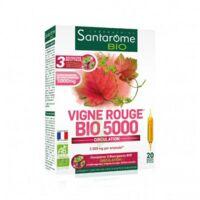 Santarome Bio Vigne Rouge Solution Buvable 20 Ampoules/10ml à RUMILLY